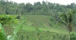 Unser Traumziel Bali