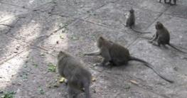 Monkey Forest auf Bali