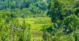 Die Sidemen Reisterrassen