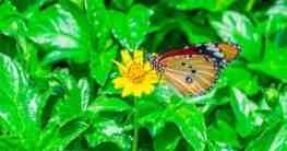 Schmetterlingspark Bali